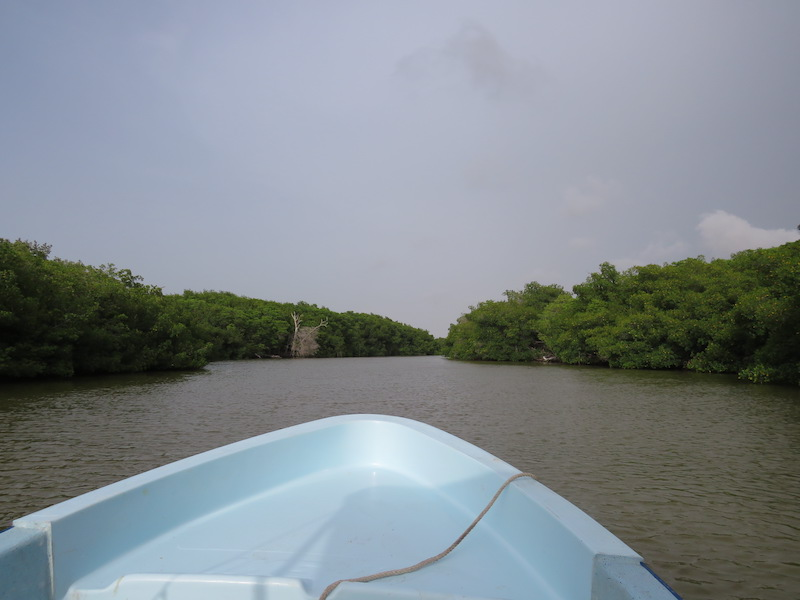 The mangrove forests of the Ria Lagartos Biosphere Reserve have been cited by community members as important to wellbeing due to the protection from hurricane impacts. Photo by Hameet Singh.