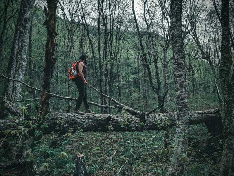 Black hiker walking across fallen tree in a forest.